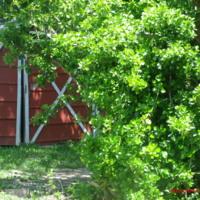 Backyard barn